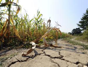 Kmalu se bo začelo ocenjevanje škode zaradi suše