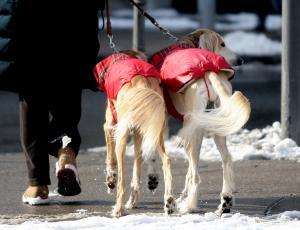 Niti živali niso imune na mraz
