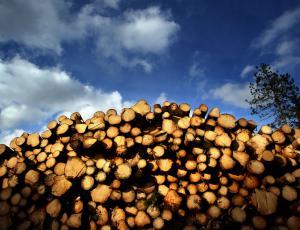 Vrednost lesa v slovenskih gozdovih upadla za skoraj četrtino