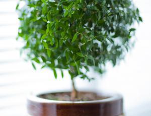 Sobne rastline: Navezani na žive sopotnice