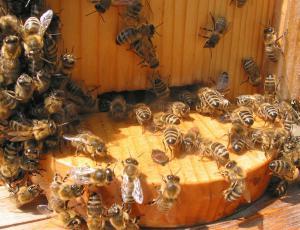 Čebelarji trgovce pozivajo k osveščanju o pomenu čebel