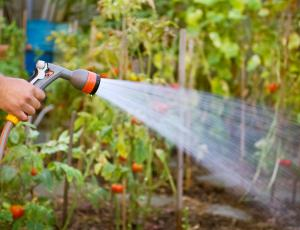 Tržno vrtnarstvo v Sloveniji v porastu