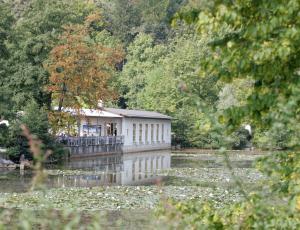 Vročina greje tudi vodo v tivolskem ribniku