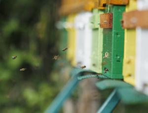 Slovensko pobudo za svetovni dan čebel podprle vse članice FAO