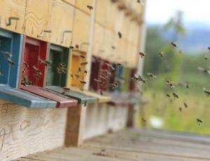 Posedi: Med razkritih čebelarjev kljub spornemu delovanju za potrošnike ni tvegan