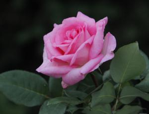 V Arboretumu cvetita kar 902 sorti vrtnic