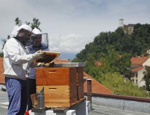 V Franciji prepoznavajo veliko vlogo urbanih čebelnjakov