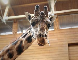 Na zimo najbolj občutljive žuželke, dvoživke in plazilci, med sesalci opice in žirafe