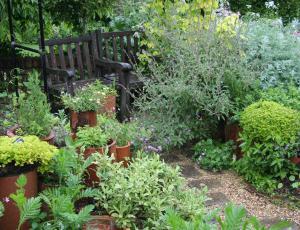 Okrasni vrt: Za zdravje in lepoto