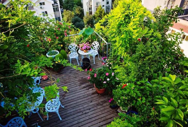 Gospod Gao, upokojenec iz pekinškega okrožja Dongcheng, je svojo hišo nadgradil z umetelnimi terasami v petih nivojih in se potrudil z izbiro za velemesto primernih okrasnih rastlin.  - Foto: www.dailymail.co.uk