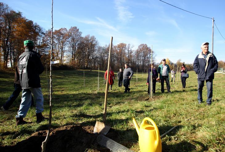 Odprtje javnega sadovnjaka MOL na Grbi, ob Poti spominov in tovrištva, 11.novembra 2015. - Foto: Roman Šipić/Delo