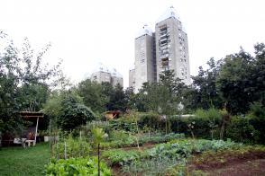 Zelenjavni vrt jeseni: Ko rastlinam prija hlad Slika 1