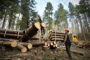 Vrednost odkupa okroglega lesa lani višja za 34 odstotkov Slika 2