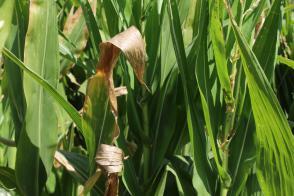 Arso: Poletne suše še ni konec Slika 2