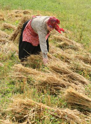 Podaljšan rok za podporo naložbam v kmetijska gospodarstva Slika 1