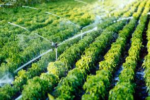 Lani za namakanje porabili manj vode Slika 1