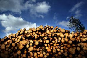 Vrednost lesa v slovenskih gozdovih upadla za skoraj četrtino Slika 2