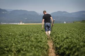 Arso z novo agrometeorološko napovedjo v pomoč kmetovalcem Slika 1