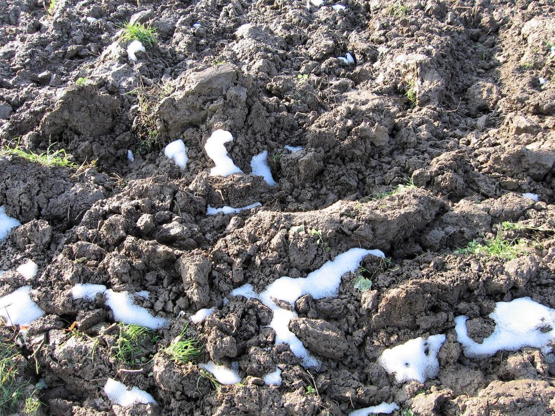 Grudasto težko zemljo razdrobi samo zimski mraz, seveda če jo pravočasno prekopljemo. Če gnojimo s hlevskim gnojem, to naredimo še v topli jeseni. Foto: Miša Pušenjak
