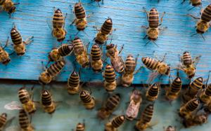 Soglasna podpora razglasitvi svetovnega dneva čebel Slika 2