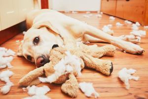 Labradorec je britancem najljubši pes Slika 1