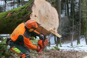 Zaradi vetroloma v državnih gozdovih za posek 1,1 milijona kubičnih metrov lesa Slika 2