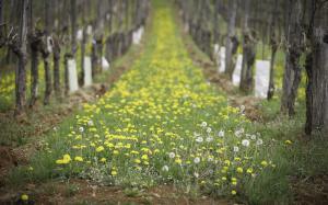 Kmetje s ponedeljkom lahko oddajo vloge za letošnje subvencije Slika 1