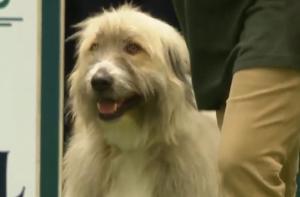 VIDEO: Rešen pes Kratu se požvižga na pravila Slika 1
