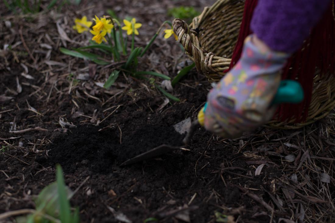 S hlevskim gnojem in kompostom ne gnojimo na zalogo, ampak pred sajenjem.