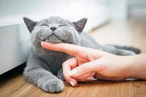 Dobronamerni nasveti: Kako božati mačko Slika 1