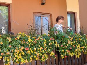 Vrtna svetovalnica: V znamenju zdravih cvetličnih kombinacij Slika 1