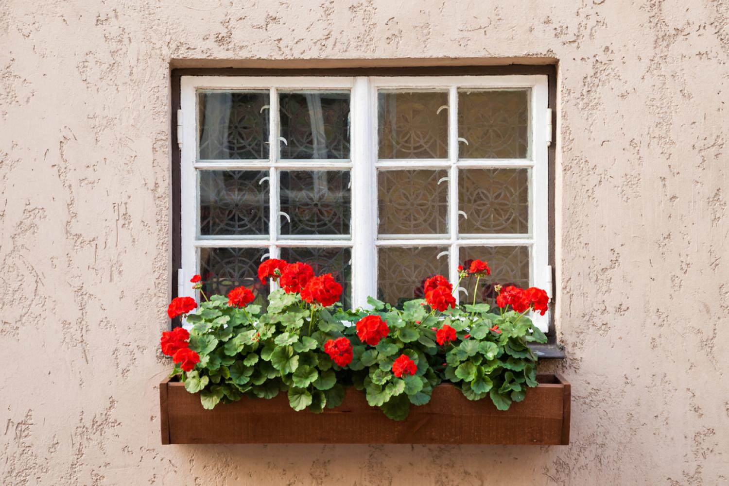 Window Boxes, Planter Boxes, Hanging Planters 100 Pictures of geraniums in window boxes