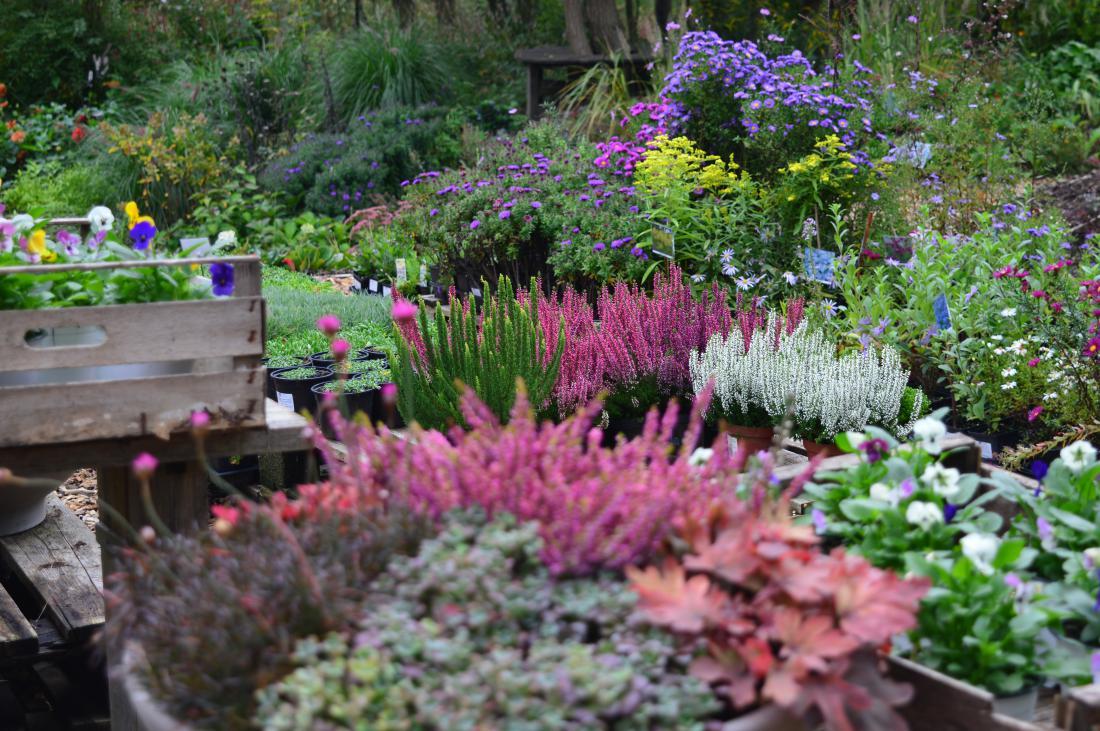 Na vrtnariji vse žari v jesenskih barvah.