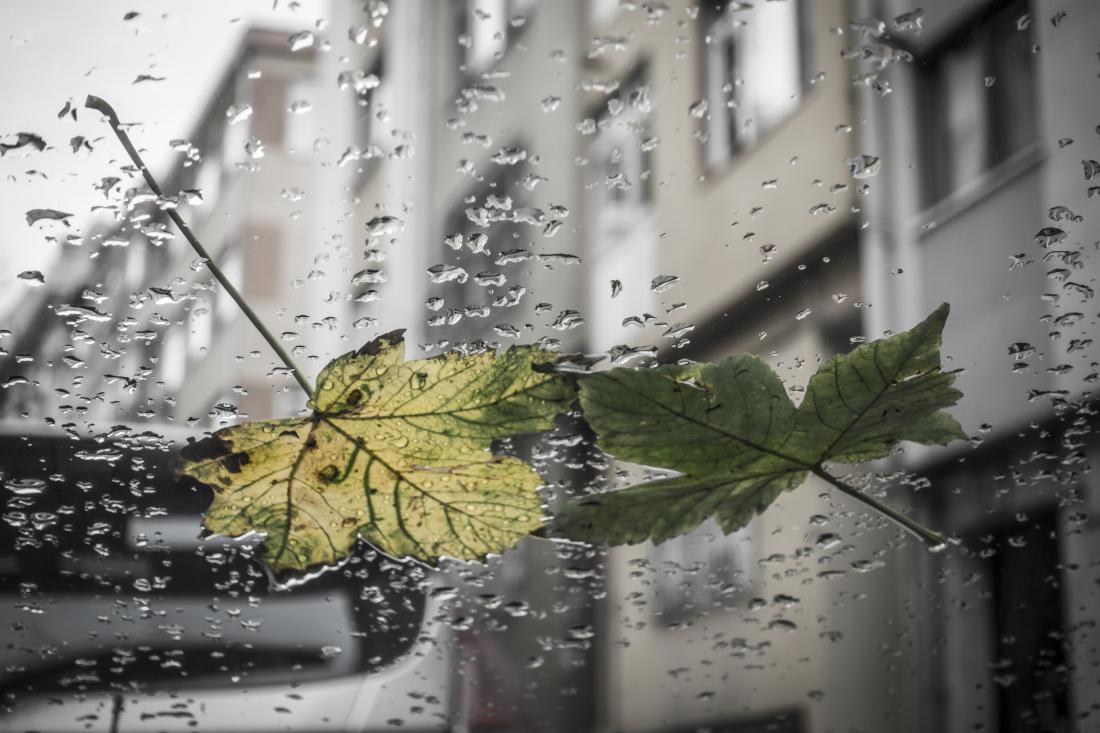 Najbolje je, da se pomivanja lotimo na oblačen (a ne deževen) dan. FOTO: Rasim Rasimoglu/Shutterstock