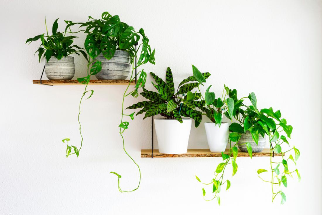Na polici ob domačem delovnem kotičku ne smejo manjkati okrasni lončki z rastlinami, ki čistijo zrak. FOTO: maxfluor/Shutterstock