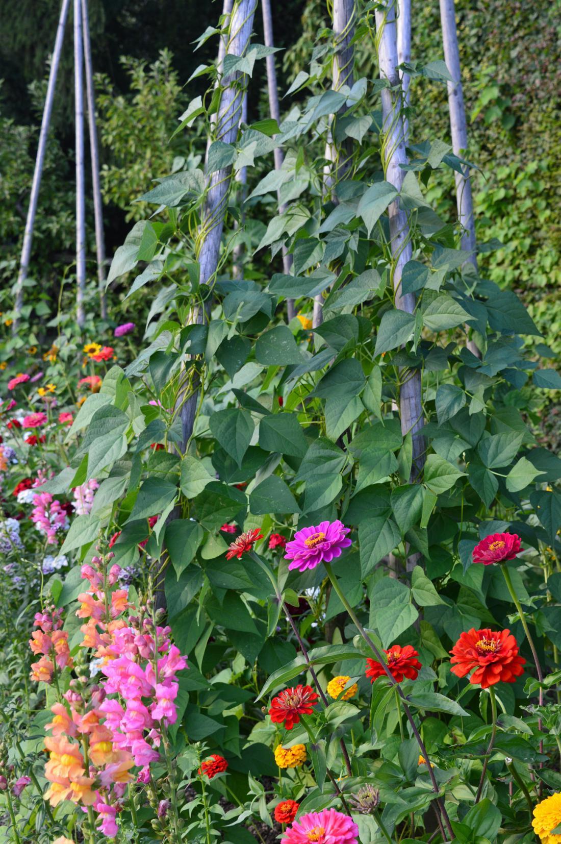Cvetje privablja na zelenjavne gredice opraševalce.
