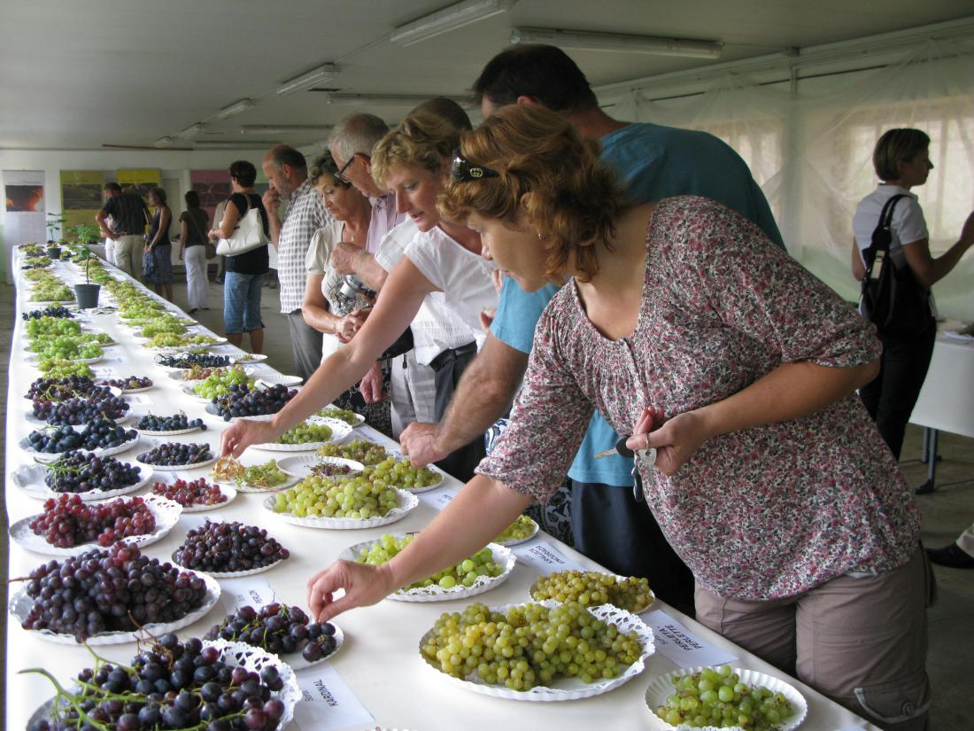 Največja razstava grozdja v Sloveniji.