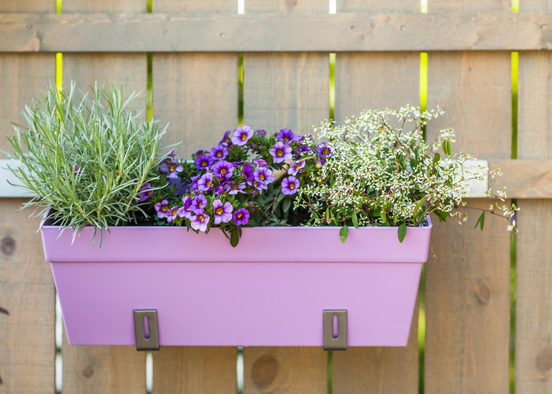 Za balkon je uporabna tudi pestra zasaditev v enem koritu: na primer rožmarin, milijonski zvonček in drobnocvetni beli mleček (FOTO: Shutterstock).