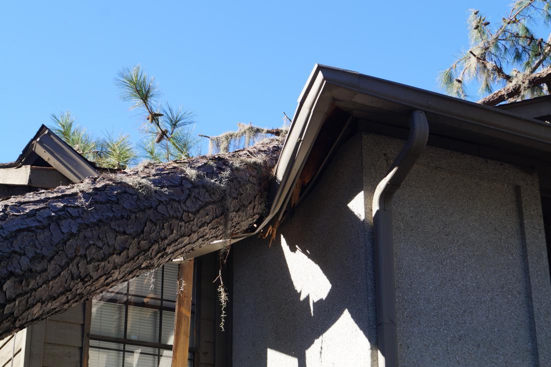 Zavarovalnica krije tudi škodo, ki nastane kot posledica padca drevesa ali dela drevesa na objekt, ne glede na to, koliko je bilo drevo staro. FOTO: Josh Foote/Shutterstock