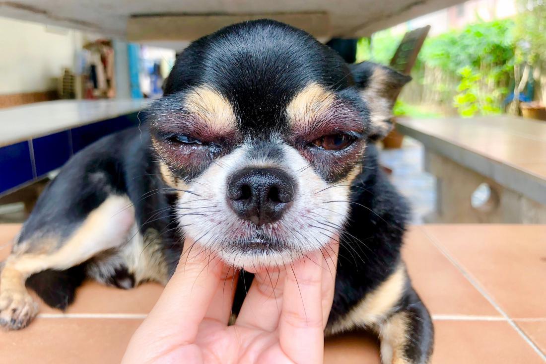 Težave z vnetimi očmi so lahko sezonske, kar pomeni, da so najbrž alergijske. FOTO: Oriohori/Shutterstock
