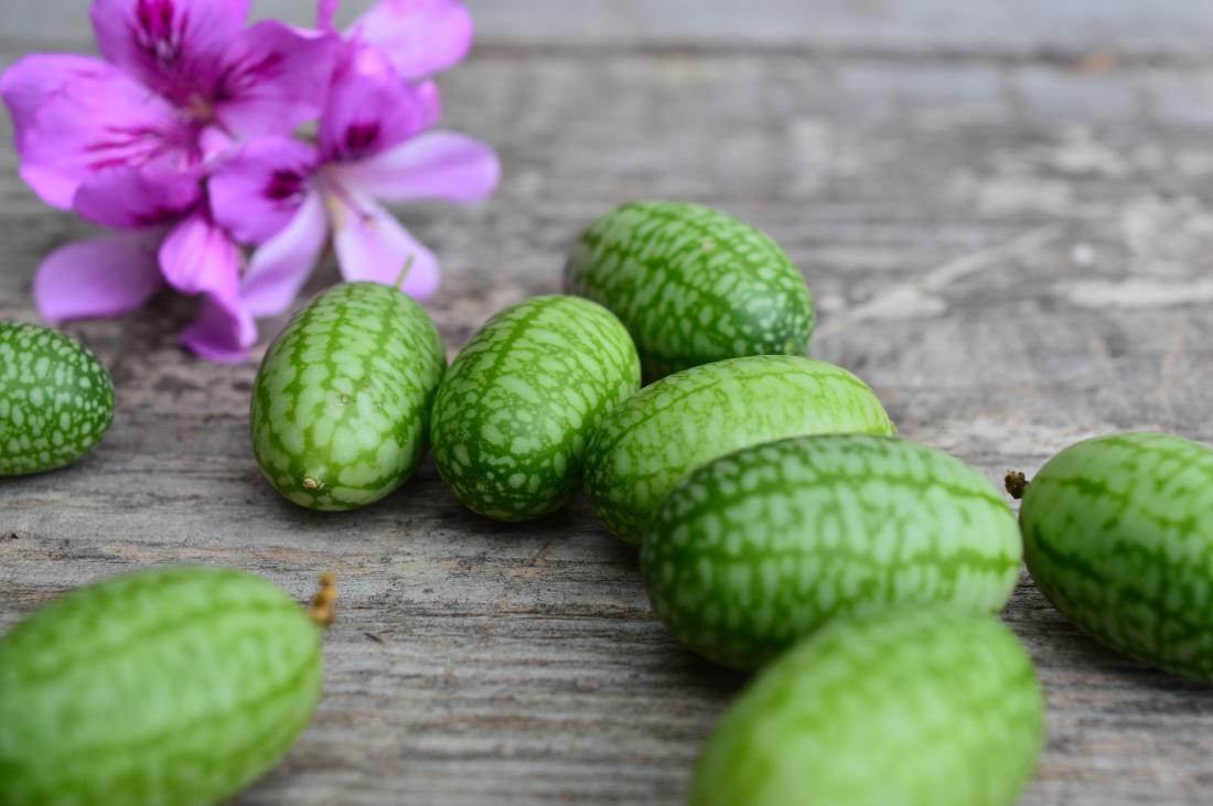 Drobni plodovi mehiških kumar so slasten prigrizek na sprehodu po vrtu.