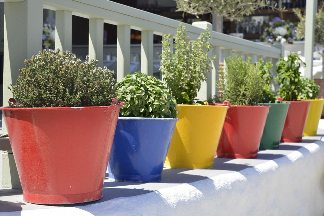 V kuhinjo lahko prenesemo lonce z začimbnicami, ki so rasle na balkonu. FOTO: Anjo Kan/Shutterstock