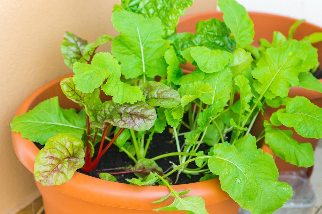 Za manjše cvetlične posode so primerne hitro rastoče rastline za rezanje listov. Foto: arinaGreen/Shutterstock