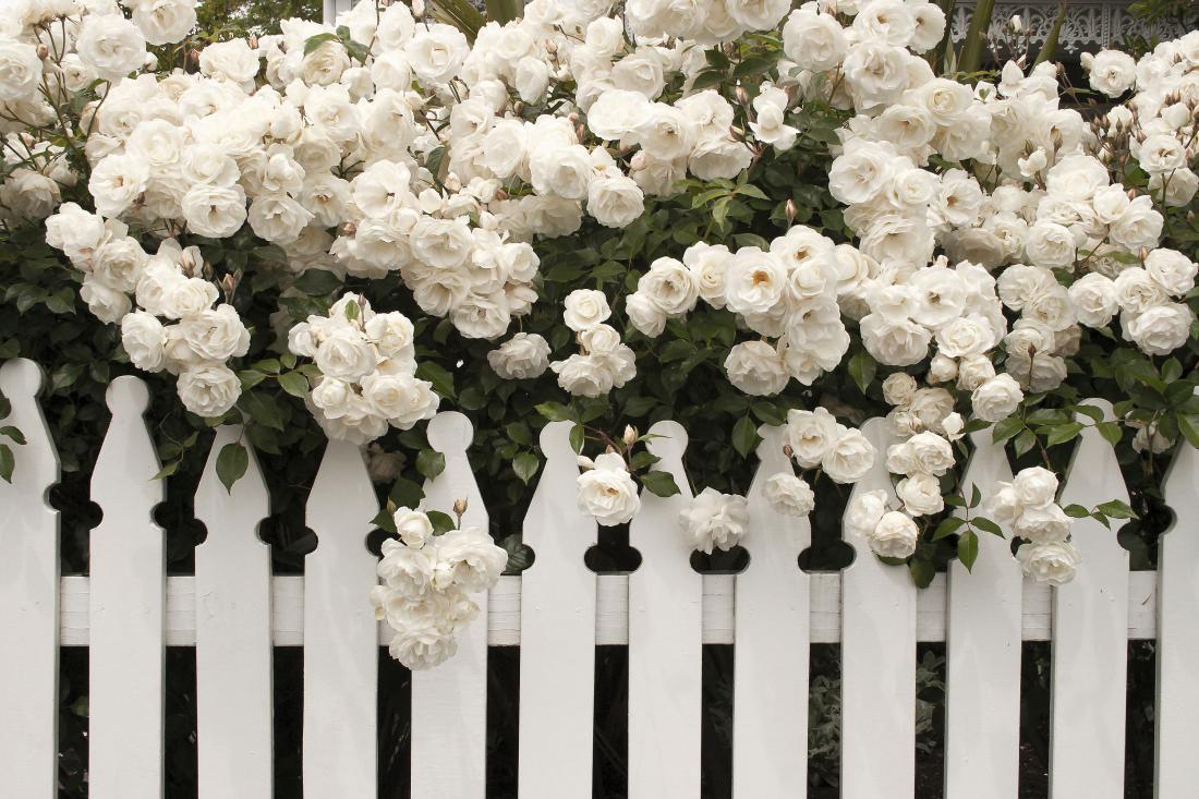 Bel vrt. Foto: kamonnut/Shutterstock