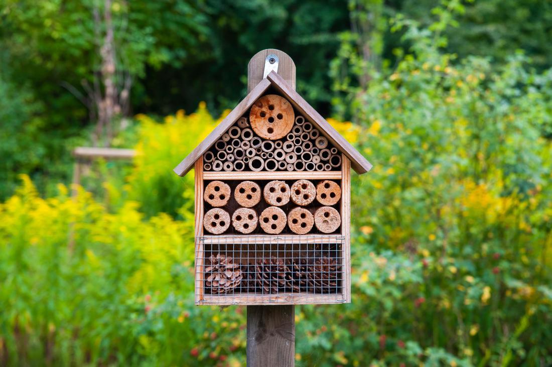 Hotel za čebele. Foto: dies-irae/Shutterstock