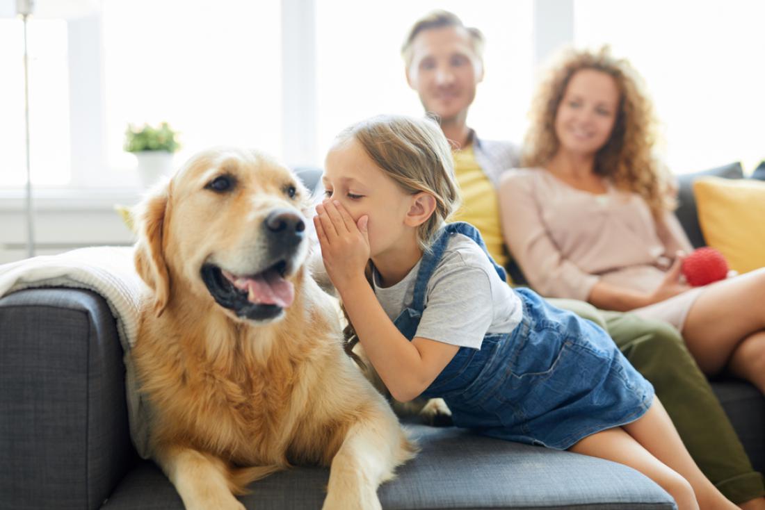Če psu rečete sedi in vas uboga, ali to pomeni, da razume človeški jezik? Da, pravijo znanstveniki, ki so prepričani, da z živalmi lahko komuniciramo, a v omejeni obliki, saj so naši možgani precej drugačni od živalskih. FOTO: Pressmaster/Shutterstock