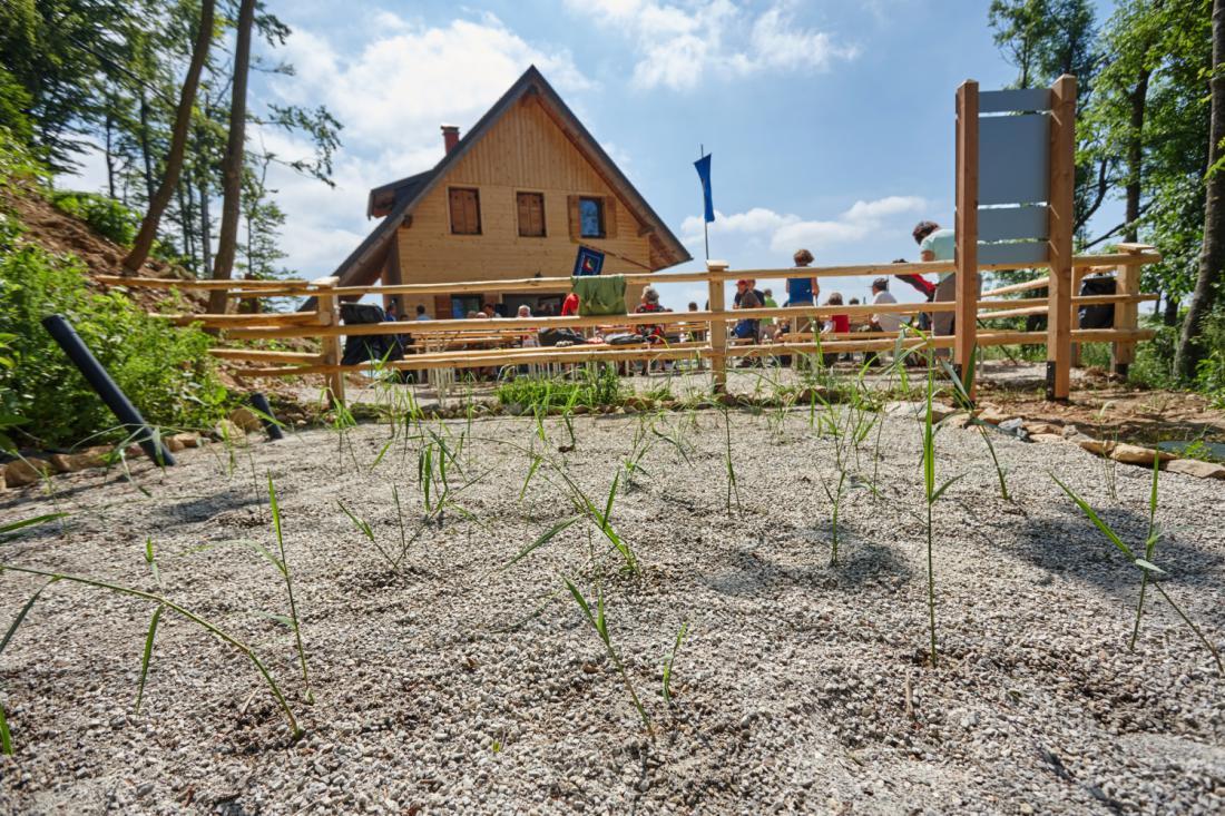 Primer rastlinske čistilne naprave za planinsko kočo ob vzpostavitvi delovanja (po zasaditvi z navadnim trstom).