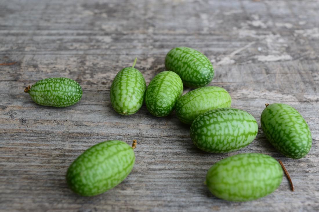 Plod mehiške kumare je videti kot 2,5 cm velika lubenica.