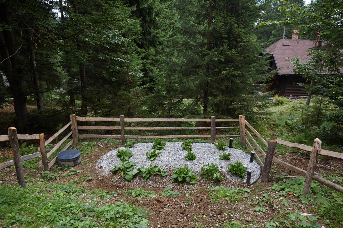 Primer rastlinske čistilne naprave za manjši turistični objekt ob vzpostavitvi obratovanja (po zasaditvi z alpsko kislico).