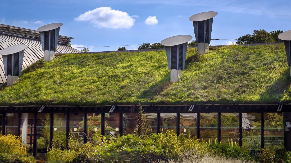 Zelene strehe, ki veljajo kot absorberji zvoka in hladijo stavbe, ne prekrivajo le ravnih strešnih površin. Priljubljene so tako za javne objekte kot stanovanjske hiše.